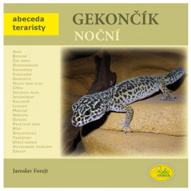 Night Gecko