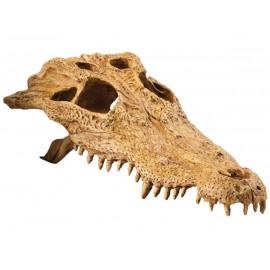 Krokodýlí lebka